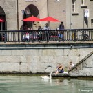 Feeding swans on the River Limmat