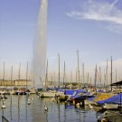 The Jet d'eau and swans in Geneva